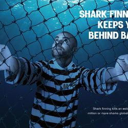 Don't Kill Sharks