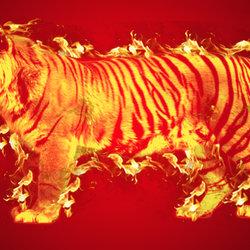 تصميم نمر مشتعل