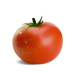 طماطم حقيقية داخل الاليسترايتور