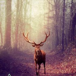 Deer (manipulation)