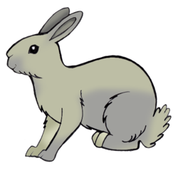 a little random rabbit