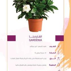 Plant Social Media Story