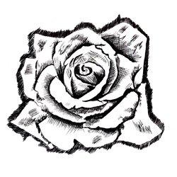 Black ink on paper // The Rose