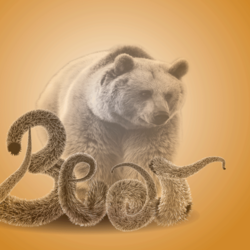 dazaine bear