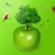 جاذبية التفاح