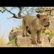 My Lion 3D Model