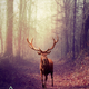 Deer (manipulation)