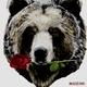 love of  bear