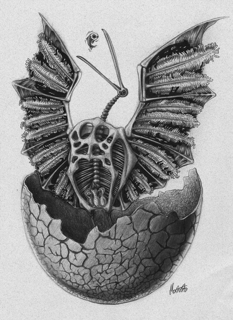 طائر الأركيوبتركس (منقرض)