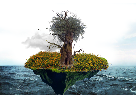 What Did The Tree Learn From The Earth