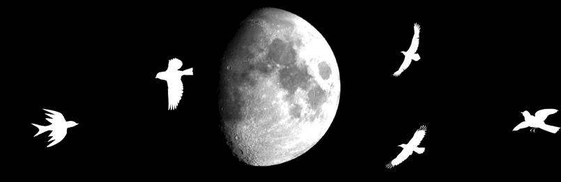 القمر و النجوم