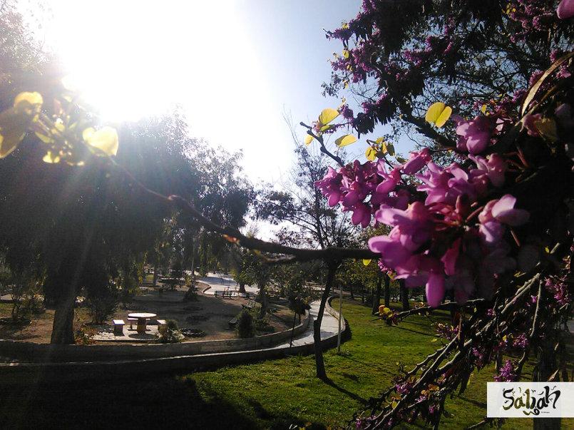 حديقة تشرين .. ربيع 2106