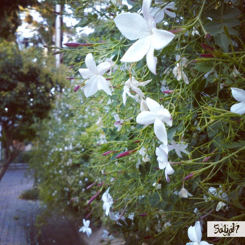 Enjoy Damascus ^_^