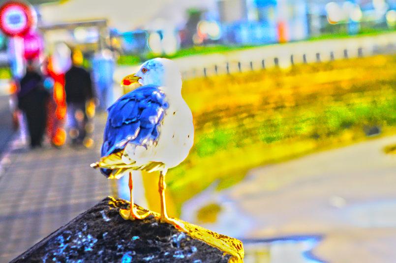 طائر في المغرب بمدينة الصويرة