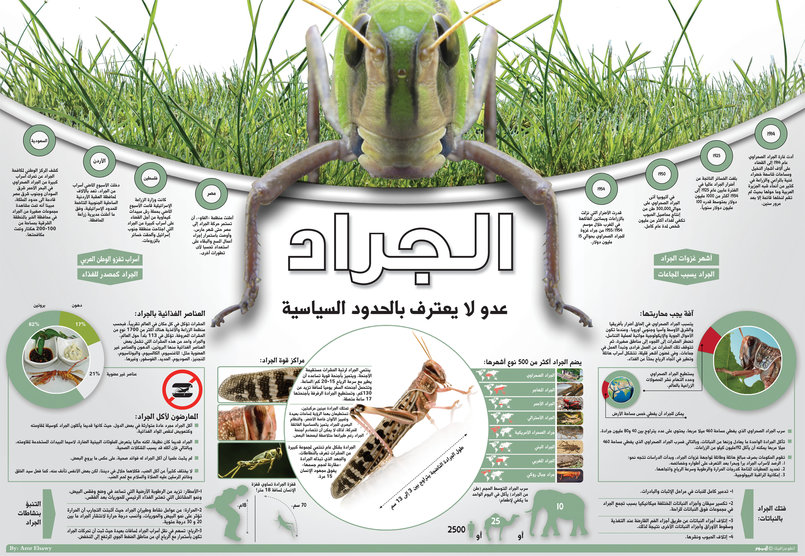 Infographics Amr Elsawy