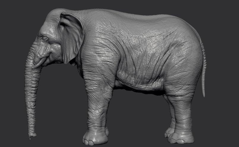 2 - Elephant