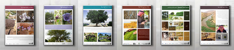 Several Publications: Posters, Flyers, Booklet design and Calendar