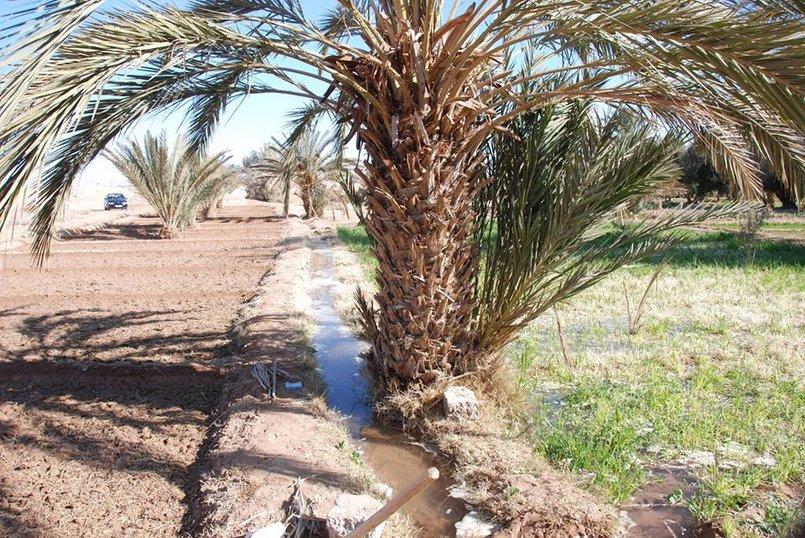 صور للطبيعة بالمناطق الجنوبية الشرقية - الجرف إقليم الراشدية بلمغرب
