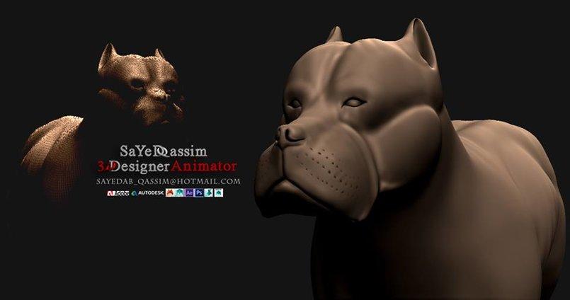 pitbul dog 350$