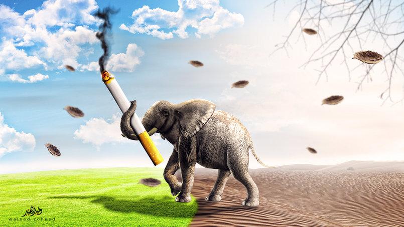 التدخين والطبيعة