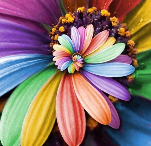 تلوين الصور بالوان مختلفة