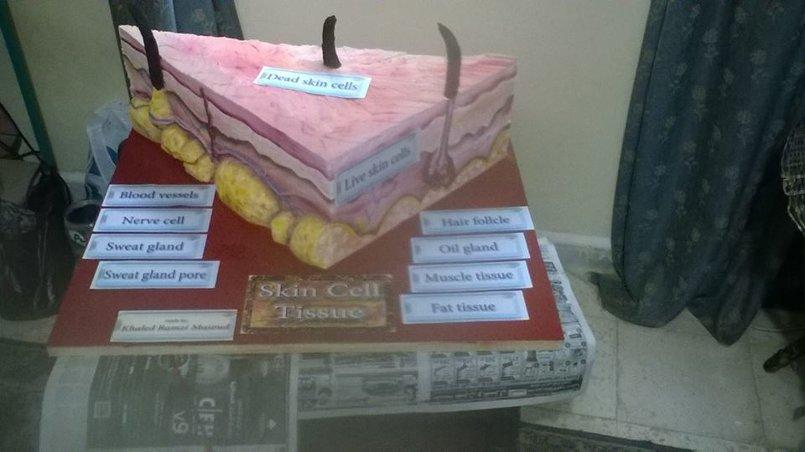 نموذج طبقات الجلد