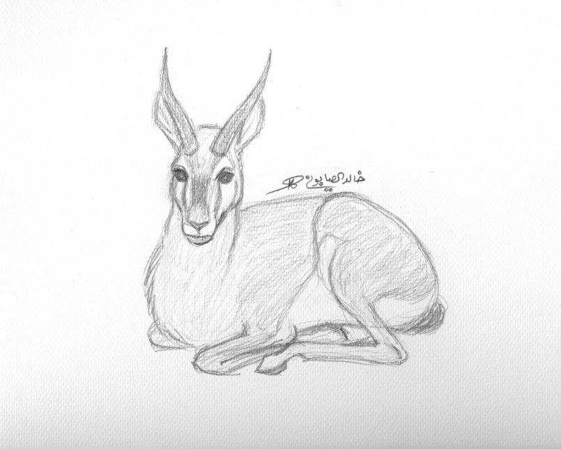 A gazelle sketch