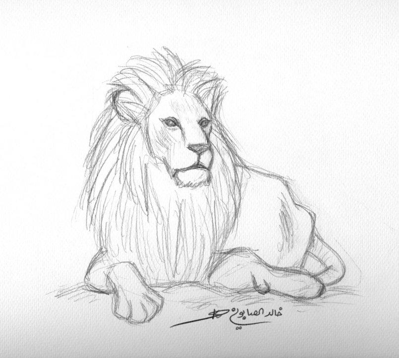 A lion sketch