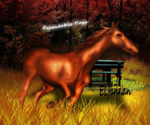 horse Hieran
