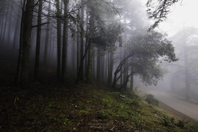 صور الطبيعة