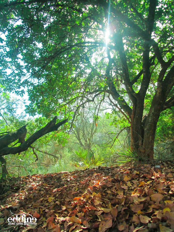 عمق الغابة
