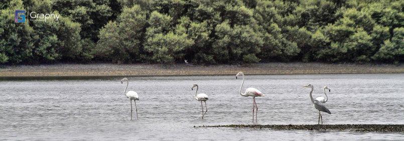 Ajman Lake