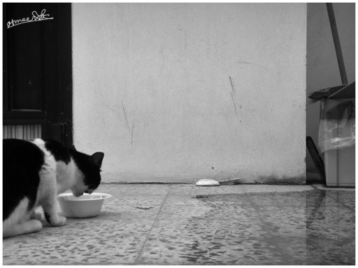 A black and white cat who lives in my garden eating.
