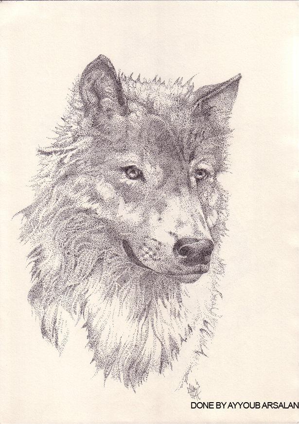 Stippling, Wolf