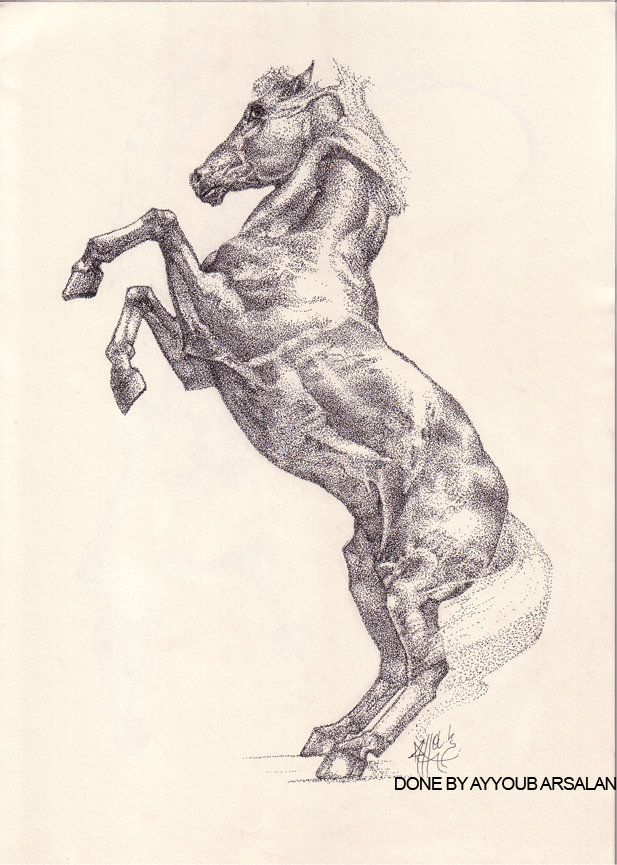 Stippling, horse practice