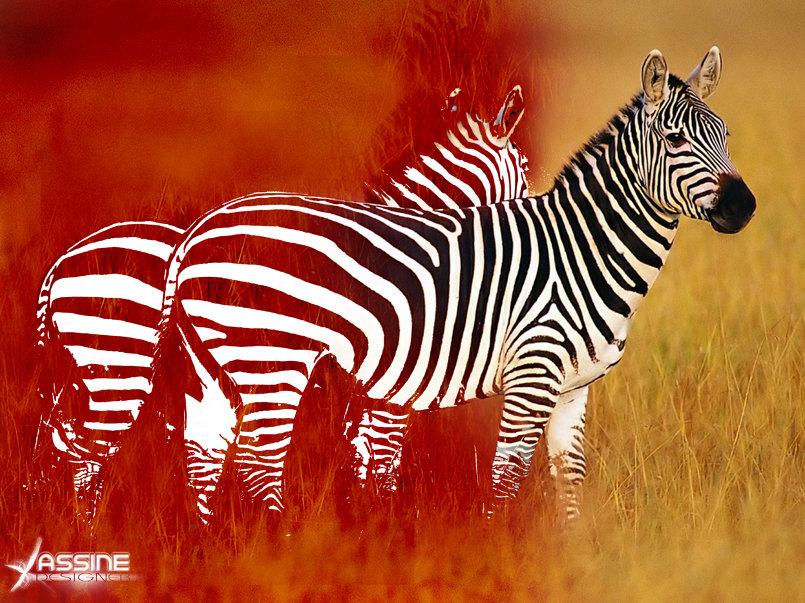 zebra imagination :)