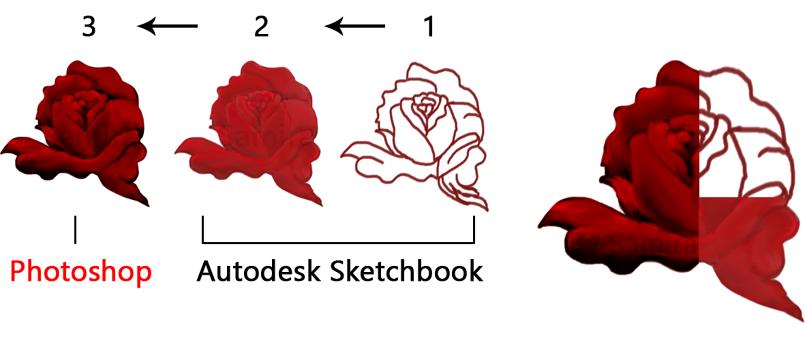 وردة جورية- رسم رقمي