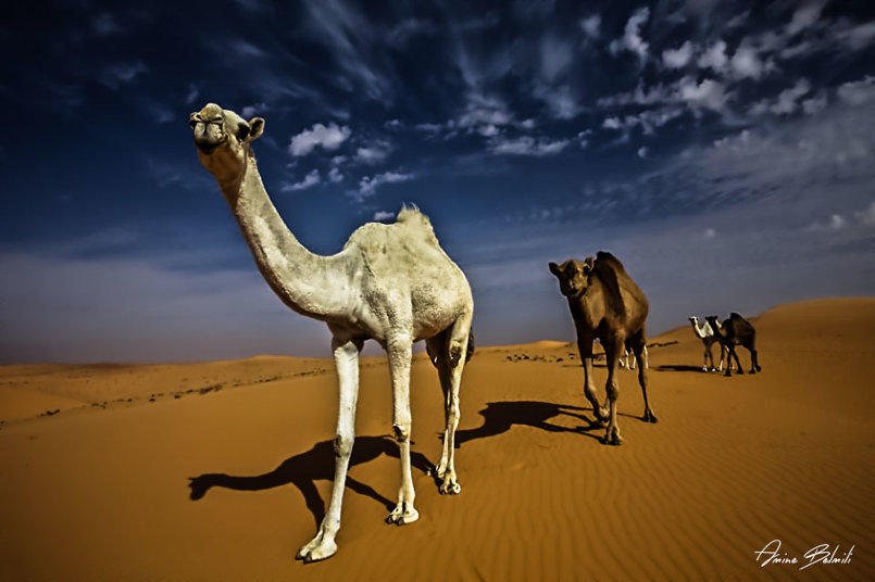 سحر الصحراء
