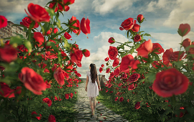 خلفيات الورد للفوتوشوب