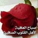 Gamal Shalaan