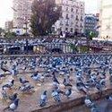 Nour Ak
