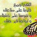 Gehan Essam Elrafey