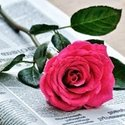 الورد الجورى