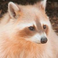 UliUli's avatar