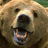 James Garden's avatar