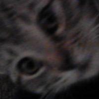 Austin Howse's avatar
