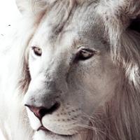 shod4n's avatar