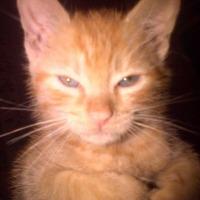 Ro-may-o's avatar