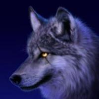 Wesley Hendriks's avatar