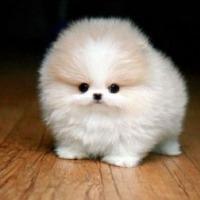 PuppyLover01's avatar